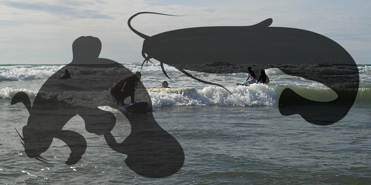 Silhoettes of catfish on surfing scene